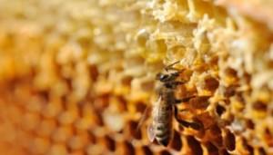 Can Raw Honey Prevent Seasonal Allergies?