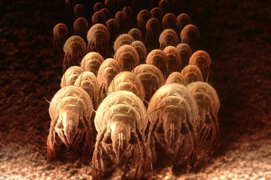 How to Deal with Dust Mite Allergies
