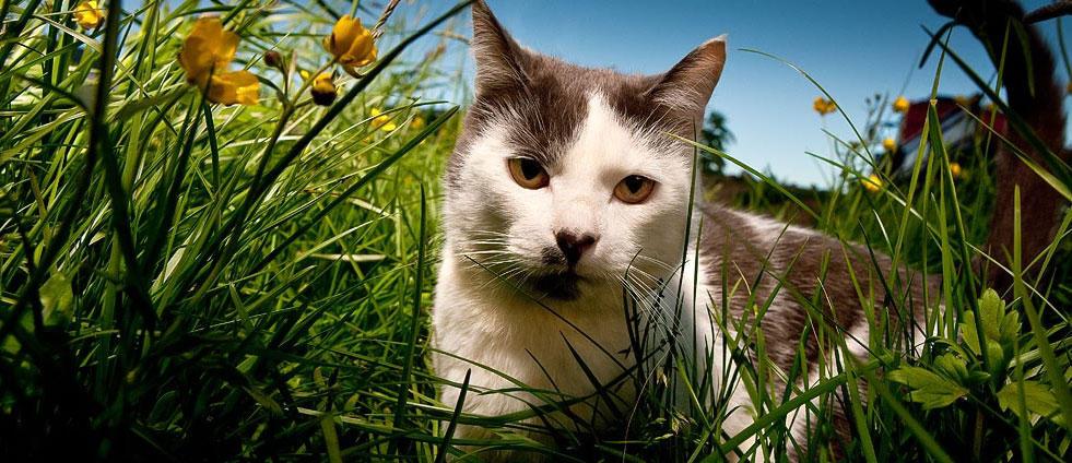 Outdoor Allergens