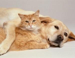 allergic to dog dander
