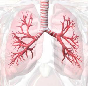 bronchial tubes